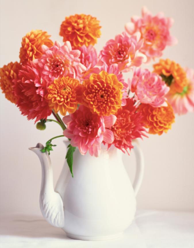 flowers in coffee pot